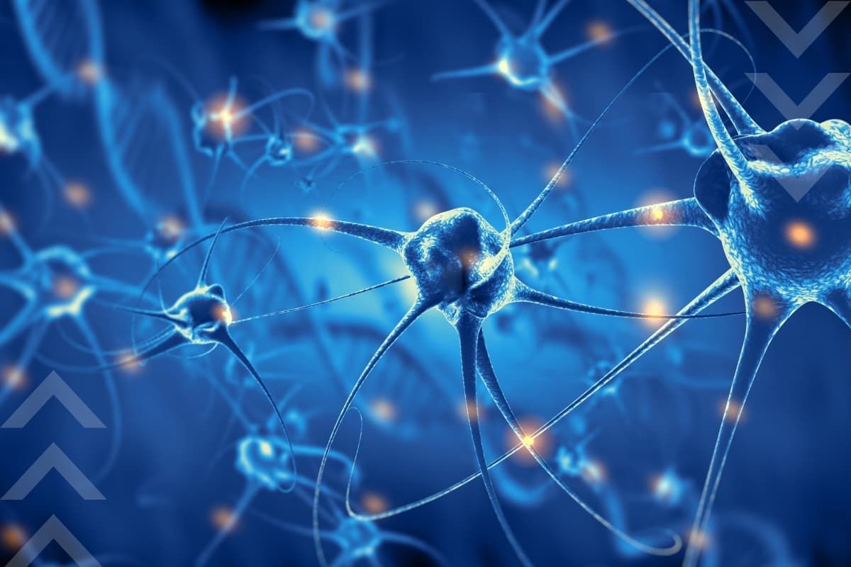 What diseases of the nervous system exist?